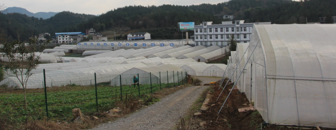 恩施市巨鑫公司蔬菜基地育苗温室 及8m大棚工程