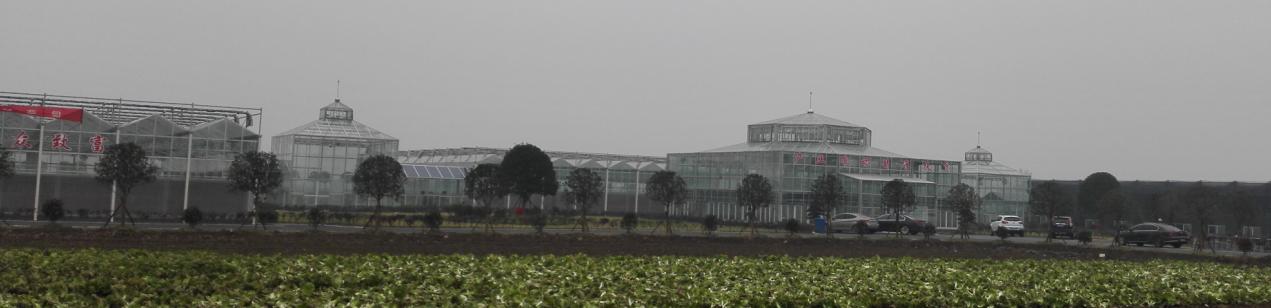 武汉市蔡甸区张湾街蔬菜示范基地温室项目工程