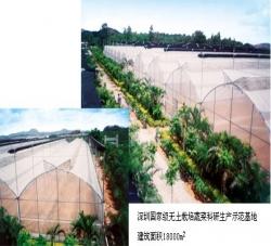 深圳国家级无土栽培蔬菜科研生产师范基地