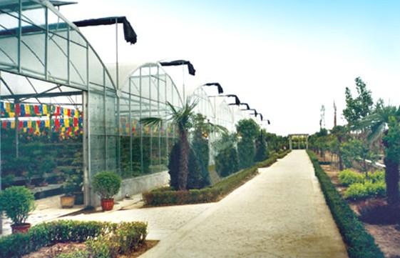 LWBSG—8型玻璃薄膜组合温室
